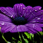 Beautiful-Purple-Flower1