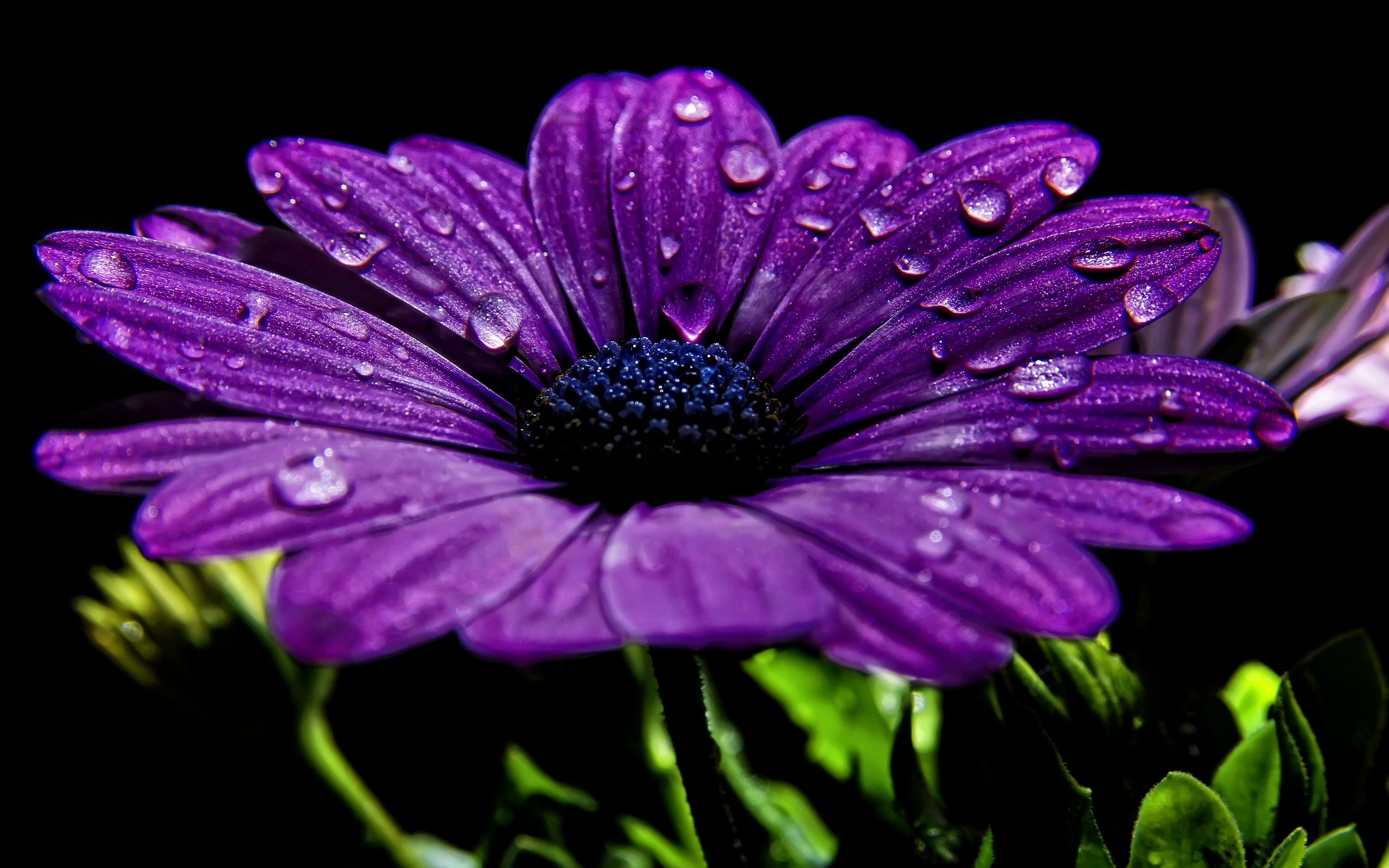 Beautiful-Purple-Flower1